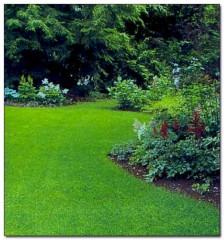 Уход за газоном в саду