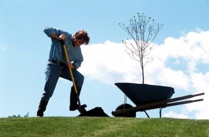 как правильно сажать кустарники и деревья