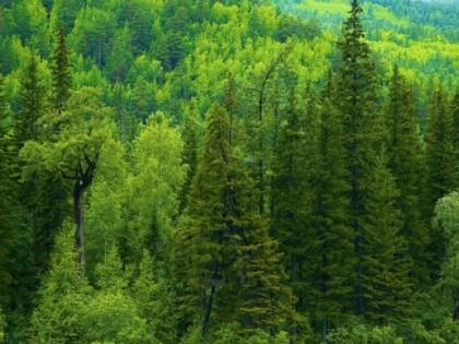 Хвойный лес — источник здоровья и неисчерпаемая кладовая ценного сырья