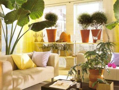 украшение интерьера комнатными растениями