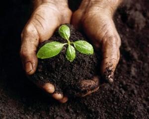 использование супер торфа в качество плодородного грунта при проведении ландшафтных работ