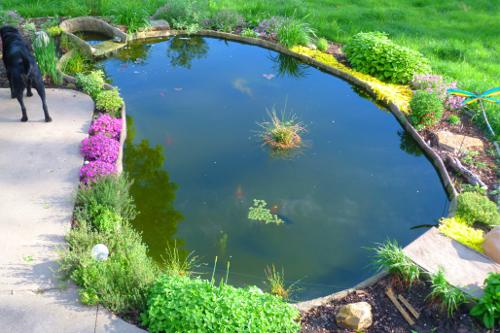 Pond with his hands for fish farming