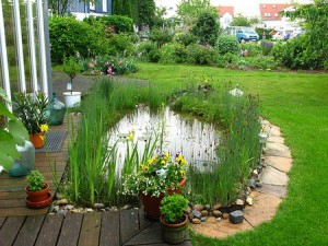 artificial pond at the dacha