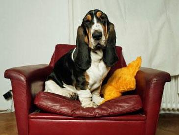 Как ухаживать за кожаными креслами правильно и просто