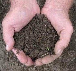 desert-sandy soils